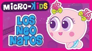 LOS NEONATOS - Microkids - Distroller