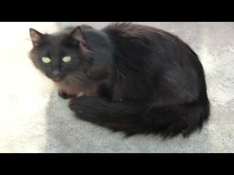 Black Cats! --- CAT COMPILATION
