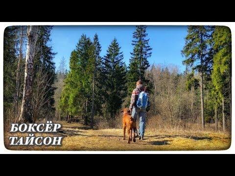1 ДЕНЬ В ЛЕСУ С СОБАКОЙ / ЖАРИМ КУРИЦУ