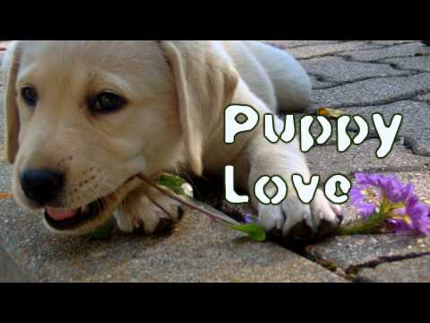 TeknoAXE's Royalty Free Music - Puppy Love -- Valentine/Piano/Violin/Duet -- Royalty Free Music