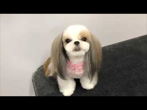 Cute Dog and Puppies Haircut Compilation 2019
