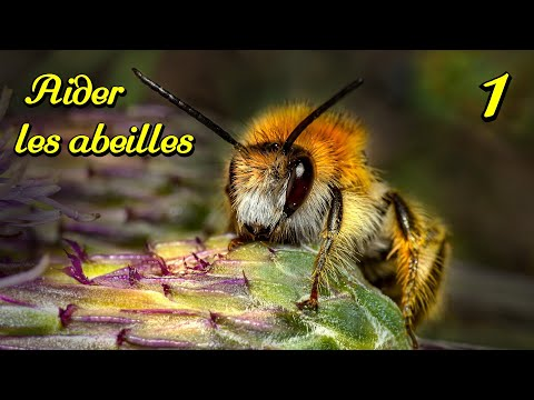 comment attirer les abeilles au jardin 1 2 hd youtube. Black Bedroom Furniture Sets. Home Design Ideas