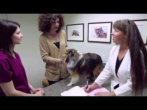 Lake Forest Animal Clinic - Short | Lake Forest, CA