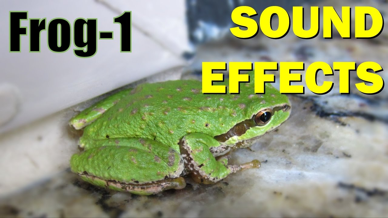 Frog Sound 1 Sound Effects Youtube