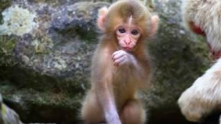 Dạy bé học nói con vật | Em tập tiếng kêu động vật và đọc tiếng việt | Dạy trẻ thông minh sớm