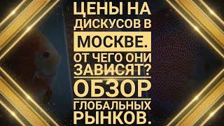 Цены на дискусов в Москве. Обзор глобальных рынков.