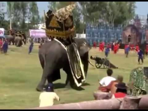ELEPHANT ATTACK IN KERALA TEMPLE INDIA 2015 - YouTube