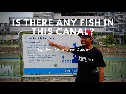 Singapore Fishing   Pelton Canal Legal Fishing Ground