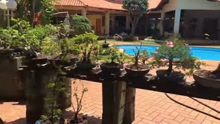 BONSAI DE CALIANDRA FLORINDO (2017) -Minhas Plantas #17 (4K Ultra HD)
