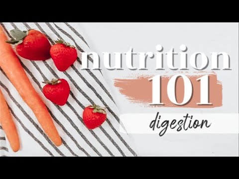 DIGESTION: THE BASICS | Nutrition 101
