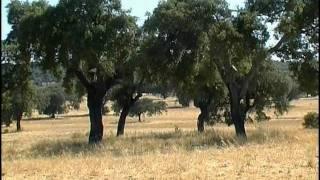 Испания. Золотой глобус - 08