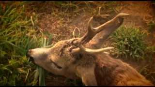 Szezonnyitó őzbakvadászat