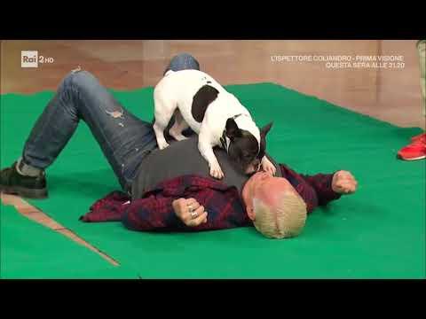 Dog Factor VIP 20.10.2017