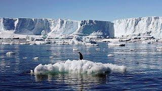 Море Росса станет «раем для пингвинов» - world