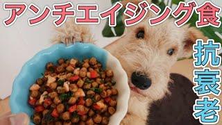 手作り犬ご飯(狗狗的鮮食食譜)『鮭とパセリとパプリカの混ぜご飯』