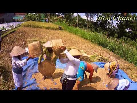 Kulihat Ibu Pertiwi (Instrumental ) Instrumental Lagu Nasional Kulihat Ibu Pertiwi