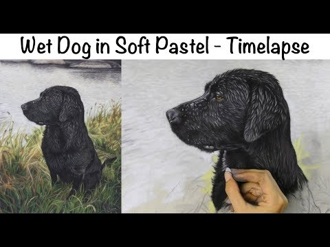 wet-fur-in-soft-pastel---timelapse