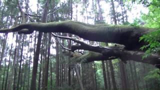 瀧神社 三重県熊野市神川町柳谷