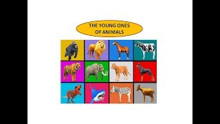 Animals and their Young Ones|Learn Wild Zoo Animals Name For Kids|Animals & their Babies