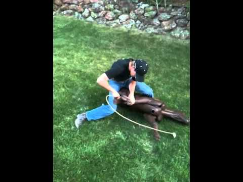 Calf Roping Dummy How To Tie The Tuf Kaf Correctly Youtube