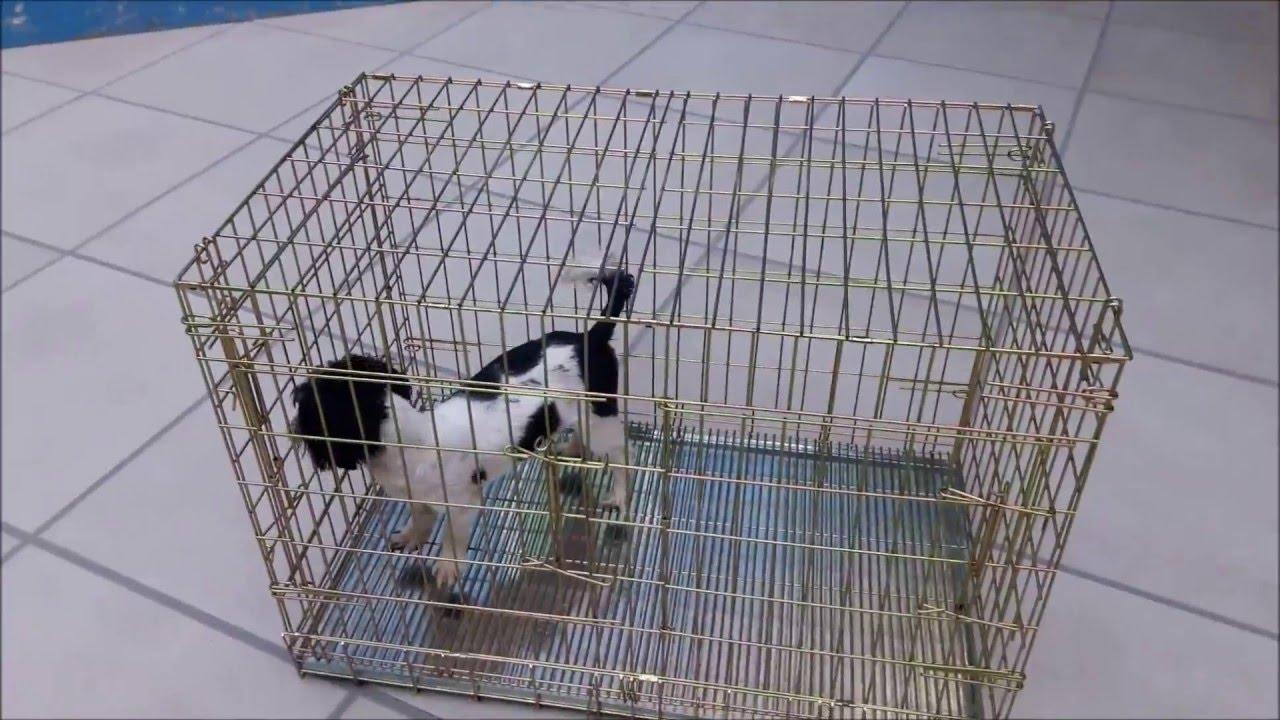 Jaula de lujo para perro venta youtube for Jaulas para cria de peces