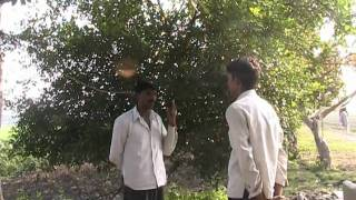 Success Story of Lemon Cultivation Hindi Access Madhyapradesh