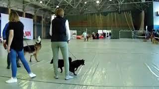 Мартовский пёс 2018. выставка собак Пермь