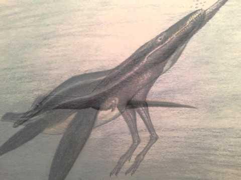 prehistoric drawings