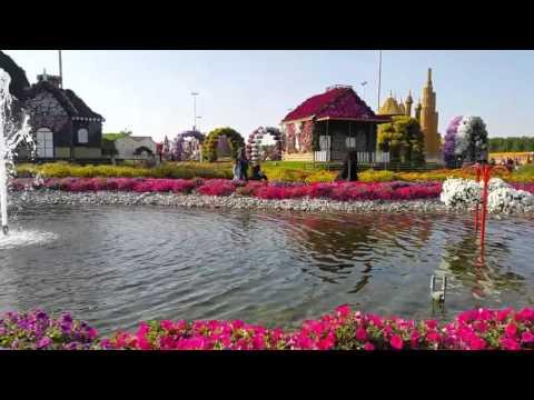 Dubai UAE miracle garden   2016 01 11