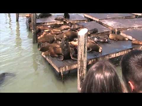 Vlog 8  - San Francisco -  (Seconda Parte)  #LudoIvaOnTheRoadUSA2015