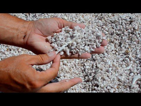Is Salton Sea Sand All Fish Bones?