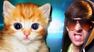 Cute Furry Kittens (official Music Video)