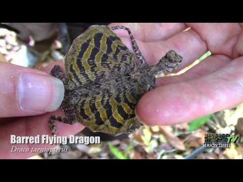 Herping Khao Yai National Park, Thailand - HerpersTV S3:Ep25