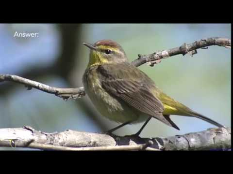 Spring Warbler Warm-up Quiz