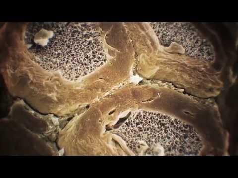 Тело человека.  Грани возможного.  3 часть.  Осязание