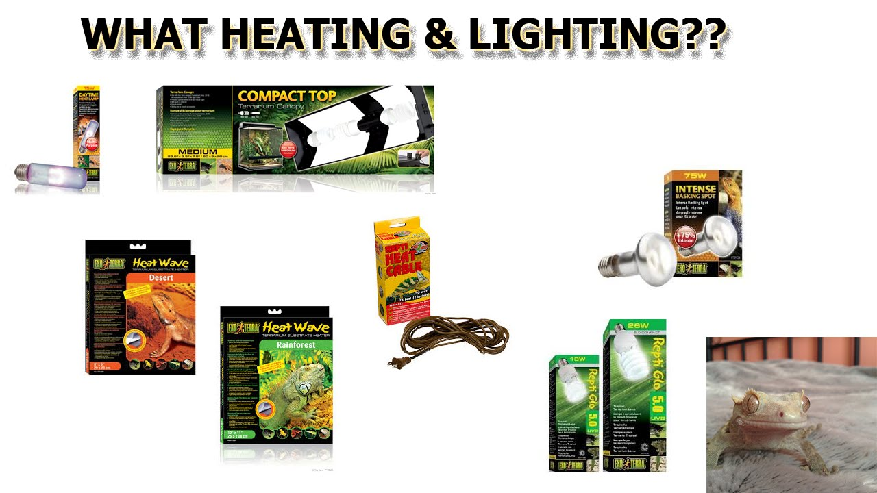 Crested Gecko Care: Heating & Lighting - YouTube