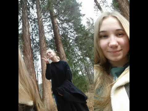 секвої найвищі дерева на планеті