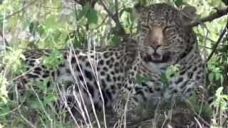 My Masai Mara Safari Highlights