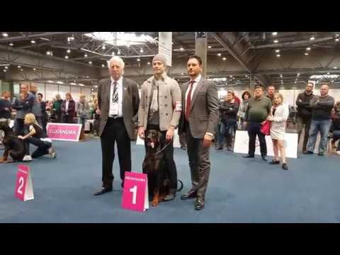 World Dog Show 2017 - Dobermann Finals