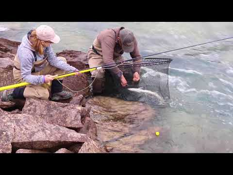 Fly Fishing The Tree River, Nunavut -August 2017