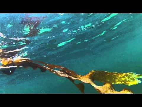 Slinger van zeewier