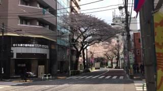 東京ブレーメン動物専門学校へようこそ!