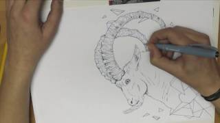 Drawing Time Lapse: Geometric Attack - Ibex