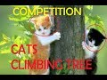 CATS CLIMBING TREE COMPETITION