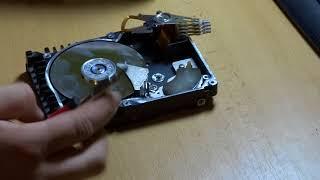 Pitva - SCSI pevný disk
