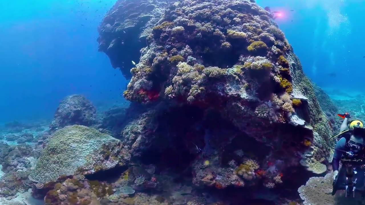Nuotare con Video vr 360 Genova delfini video vr 360 Milano Acquario