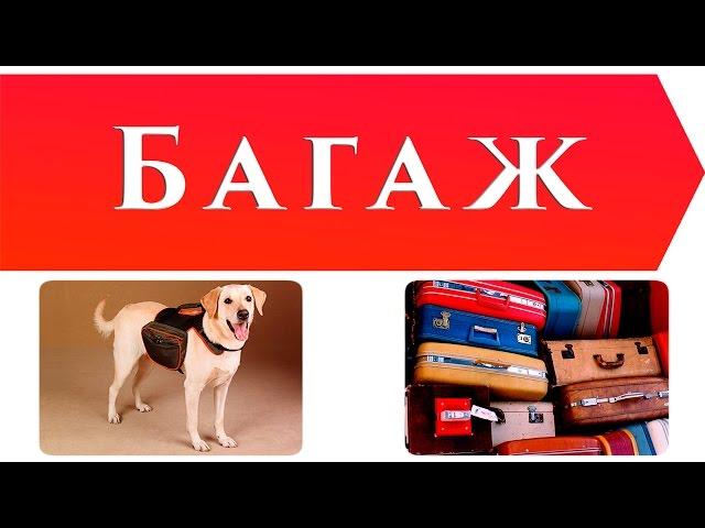 Изображение предпросмотра прочтения – ИльяПаламарчук читает произведение «Багаж» С.Я.Маршака
