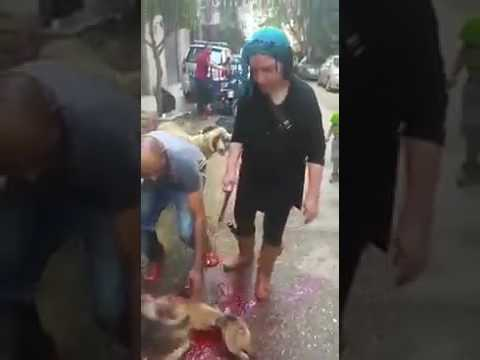 Kurban kesen kadın. Sheep slaughter woman. Sacrifice. victim 2