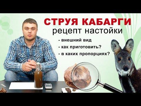Струя кабарги как приготовить настойку? Мускус кабарги правильный рецепт.