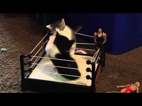 Kitten Wrestling is My New Favorite Sport